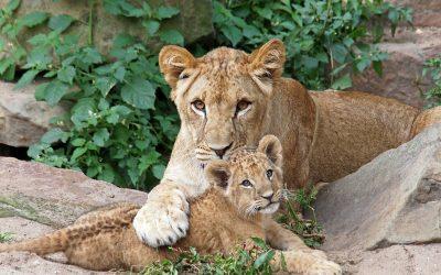 Zit er een grens aan de liefde van een moeder voor haar kind?